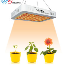 2020 Bestseller LED-Leuchten 1000w Grow Lights