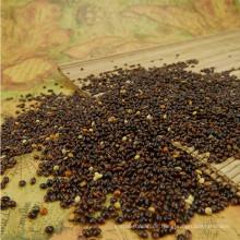 Chinesische schwarze Broomcorn-Hirse mit hoher Qualität