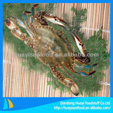 Blue swimming crab whole frozen crab