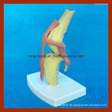 Anatomische Hundegesundheit Kniegelenk Modell für medizinische Lehre