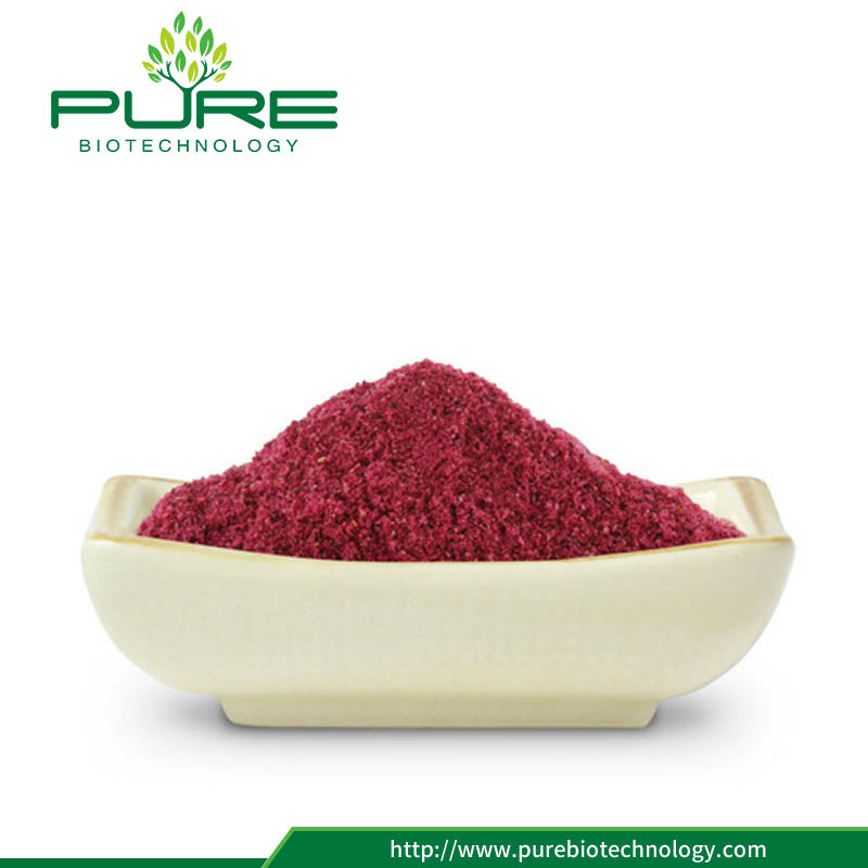Natural cranberry extract/ 1%-36% Anthocyanidins