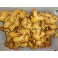Dry Ginger, Half Dry Ginger, Fresh Ginger in China