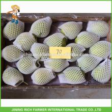 Natural Pera fresca de Shandong