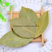 Dehydrated Dried Ad Air Dry Bay Leaf, Pelargonium, Bay Leaves, Myrcia