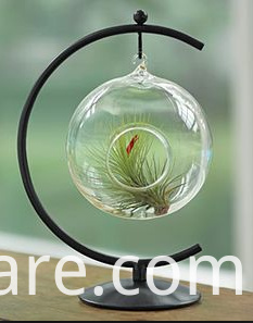 Green Plant Glass Terrarium (2)