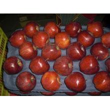 Großhandelspreise Apfelfrucht Custard Apfel Frucht