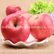 Свежие фрукты FUJI Apple