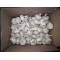 Beste Qualität Große Größe Frisch und trocken normaler weißer Knoblauch