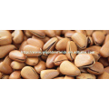 new crop 100%Pure natural wild pine nuts edible nuts