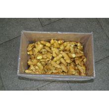 Heißer Verkauf neue Ernte frischer Ingwer