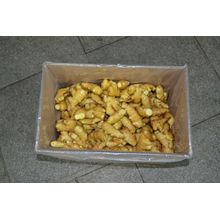 Hot sale new crop fresh ginger