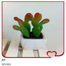 Alibaba China Wholesale Outdoor Cactus Plants With Pot