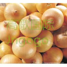 Chino fresco buena calidad cebolla amarilla