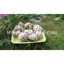 Champignons de fleurs séchées, Champignons Shiitake Hubei