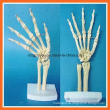 Menschliche anatomische Simulation Handgelenk Skelett Modell für medizinische Lehre