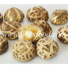 3-4cm Grade a Dry Tea Flower Shiitake Mushroom
