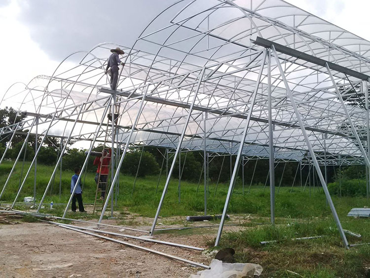 alma_greenhouse Frame