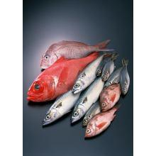 Additifs pour aliments pour animaux L-Ascorbate -2 -Phosphate
