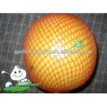new crop fresh pomelo fruit
