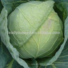 С08 Сягуан ранней зрелости теплостойкий 60 дней гибридной семена капусты