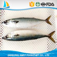 Fruits de mer de meilleure qualité congelés délicieux délicieux maquereau pacifique