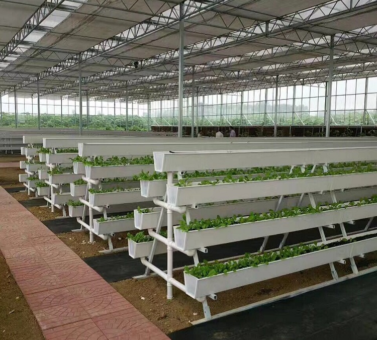 Strawberry Grow Systems