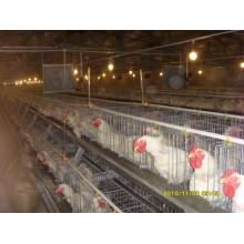 Автоматический Тип Цыпленок несушек с клетками и оборудования