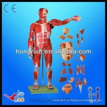170cm Life Size Modelo de anatomia muscular muscular de luxo