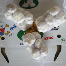 Proveedor confiable de ajo blanco fresco chino embalado en 500g X 20 / cartón