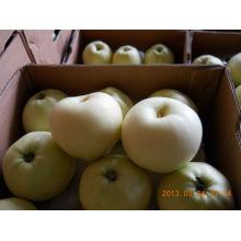 Gloden delicioso manzana en gran cantidad con bajo precio