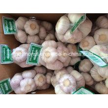 Nova temporada chinês alho fresco normal branco e branco puro