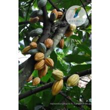 Marques d'amélioration sexuelle de la poudre de cacao