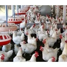 Equipamentos Avícolas Completos para Casa de Aves para Frango de Corte