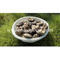 No Pollution Organic Dried Shiitake Mushroom Dried Mushroom