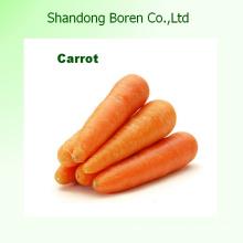 2015 Шаньдун Лучшая цена Свежий морковь