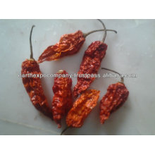 HOT CHILE FOR SAUCE MANUFACTURER