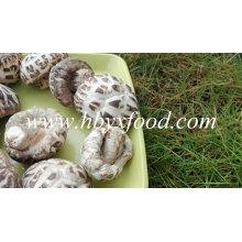 Champignons de marque, Shiitake aux fleurs blanches, Légumes sains