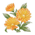 Custom Calendula Embroidery Sew On Patches