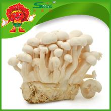 Organic Cultivated Mushroom healthy Jade white Mushroom