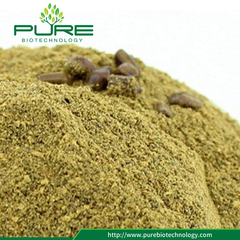 Cassia Seed Powder