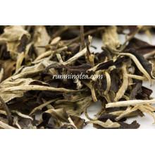 Old Tree Imperial White Moon Light Jinggu Meilleur thé blanc testé Norme de l'UE