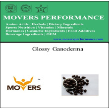 Pflanzenquelle Glossy Ganoderma Softgel