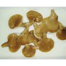 Konserven Konserven Abalone Pilz