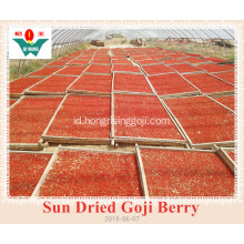 Sun Dired Goji Berry dan Wolfberry diekspor