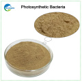 Bacterias fotosintéticas de alto contenido para aves de corral
