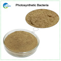 High Content Photosynthetic Bacteria For Poultry