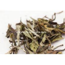 Yue Guan Bai té blanco