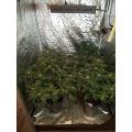 Good Quality LED Grow Light for Microgreens
