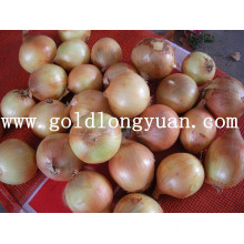 Fresh Yellow Onion From Factory