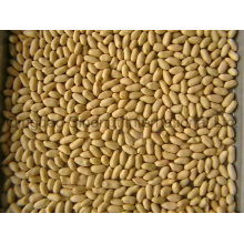 Blanched Peanuts of Good Quality